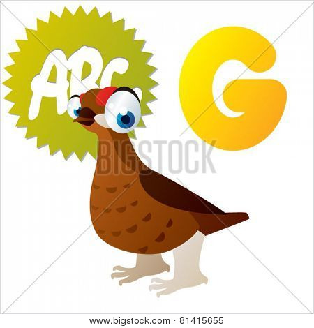 animal abc learning for kids: G is for cute little Grouse, vector illustration set for children, bright colors for flash card game
