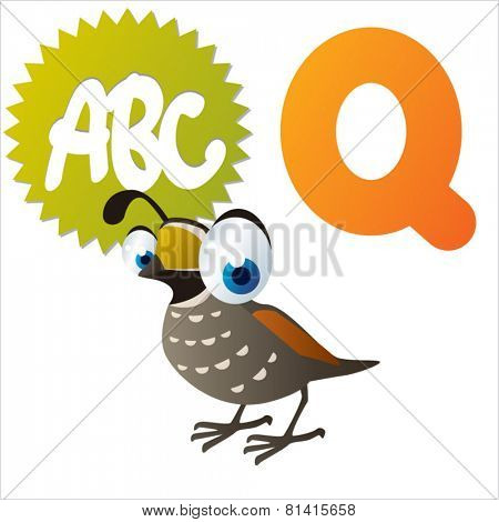 animal abc learning for kids: Q is for cute little Quail, vector illustration set for children, bright colors for flash card game