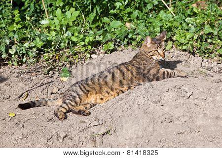 Cute Cat In The Garden