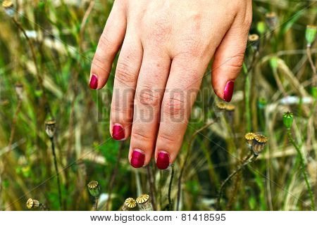 Finger With Red Fingernail In The Meadow