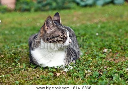 Cute Cat In The Garden With Closed Eyes