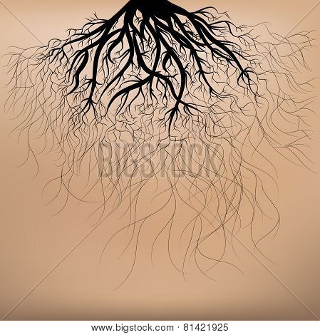 Roots Of The Tree