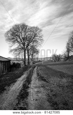 Monferrato winter panorama. Black and white photo
