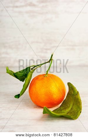 One Ripe Mandarin With Leaves. Indoors Close-up.