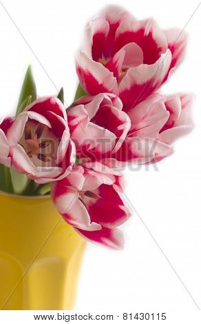Large Bouquet Of Tulips In A Yellow Vase Isolate