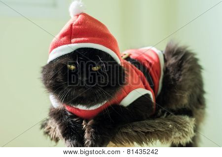 Black Santa Cat