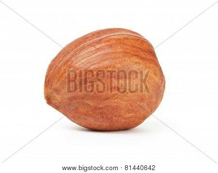 organic peeled hazelnut isolated
