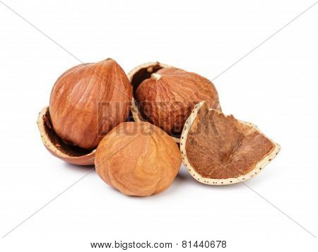 organic peeled hazelnuts isolated
