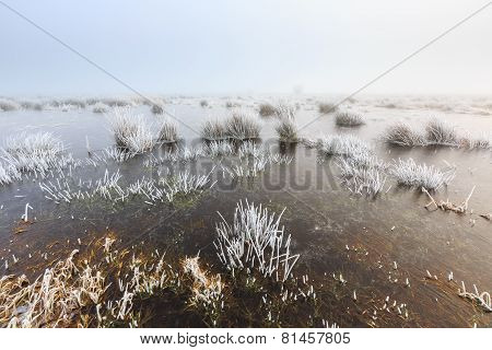 Cold Winter Landscape Of Wetlands With Mist And Hoar Frost