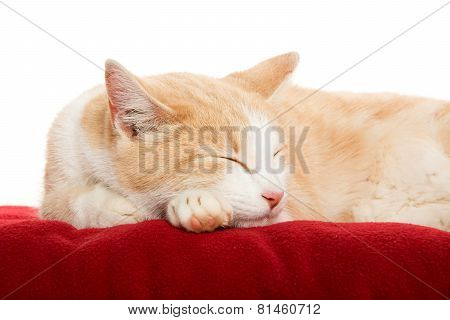 Cute Cat On Blanket