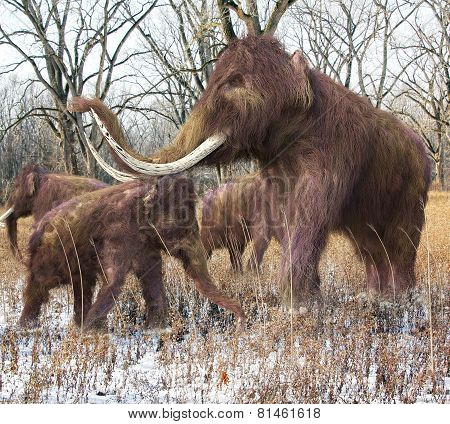 Woolly Mammoth Family In Forest