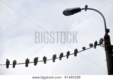 Birds Resting On Electric Cable