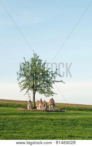 Ukrainian wooden hives in a field under a tree