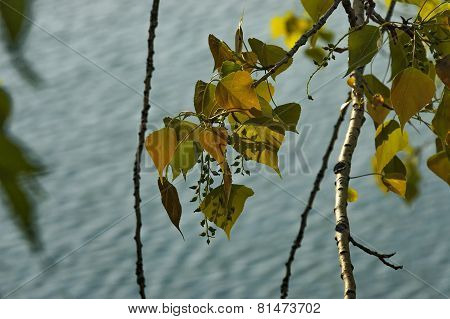 Fresh spring  leaves background