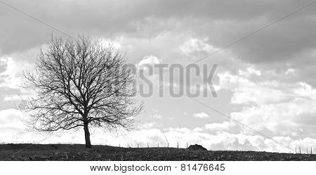 Tree In A Storm 3