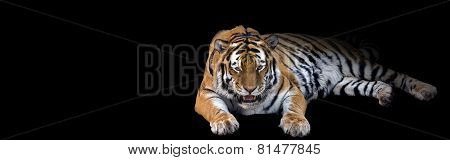 Growling Tiger Banner