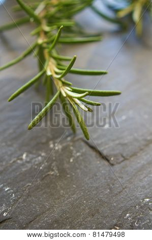 A Bunch Of Fresh Rosemary