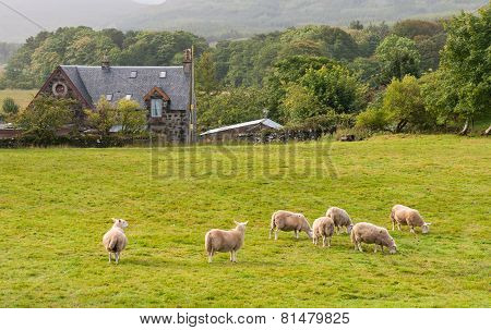Scottish Farmland