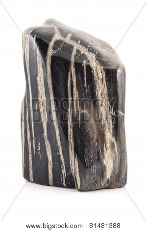 Petrified Wood Ancient Piece Black Lines