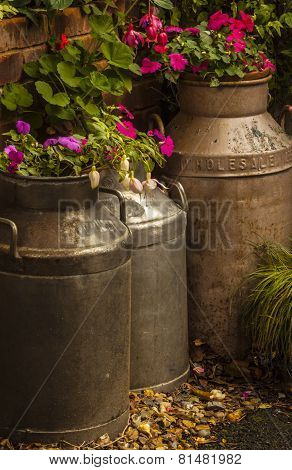 Flowers In Old Milk Churns