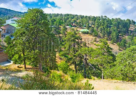 On The Troodos Peak