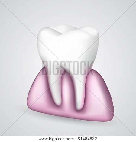 Vector tooth in the gum