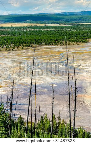 Landscape View Of Grand Prismatic Area With Dry Trees, Yellowstone