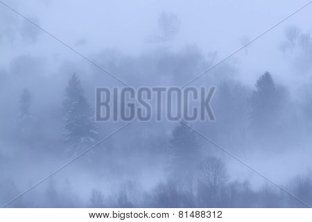 wonderful snowy and foggy landscape in the Hautes-Vosges, Lorraine, France