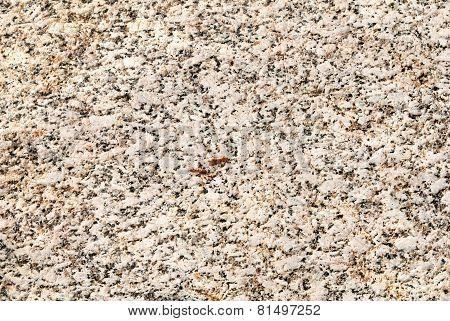 Bright closeup sandstone texture.