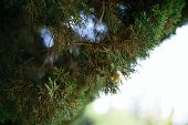 foto of view from space needle  - Cypress branch close up Bokeh. shallow depth of field ** Note: Shallow depth of field - JPG