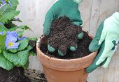 picture of loam  - gloved hand holding loam over a flower pot - JPG
