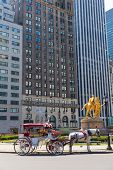 pic of carriage horse  - Central Park horse carriage rides in Manhattan New York US - JPG