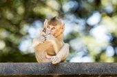 stock photo of baby-monkey  - Baby Monkey sit and out of focus background - JPG
