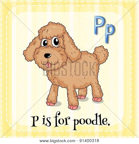Flashcard letter P is for poodle