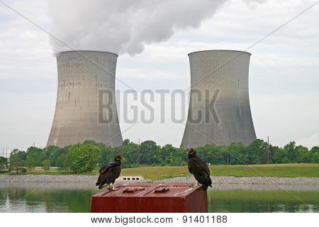 Vultures & Nuclear Power Station