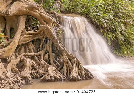 Roots And Waterfall