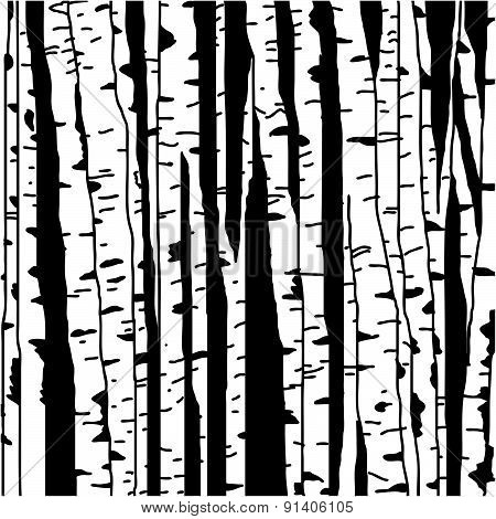 Birch three