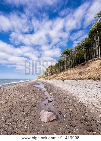 Coastal Forest On The Baltic Sea Coast