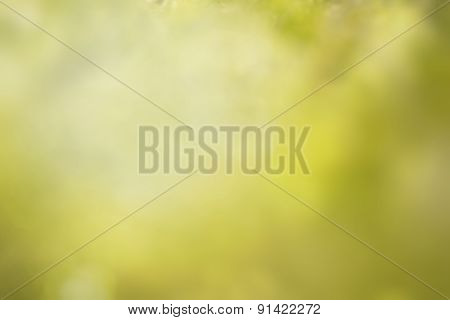 Blured Green Background