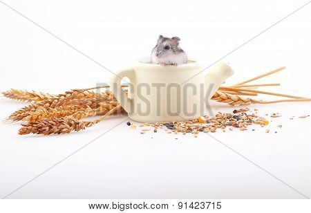 The Hamster Sits In A White Teapot In An Environment Of Ears On A White Background