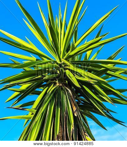 Green and yellow palm leaves on clear blue sky