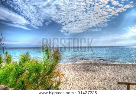 Pine Tree By The Shore In Le Bombarde Beach