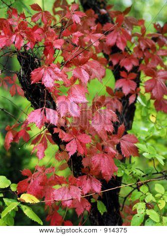Fall Colors Cometh