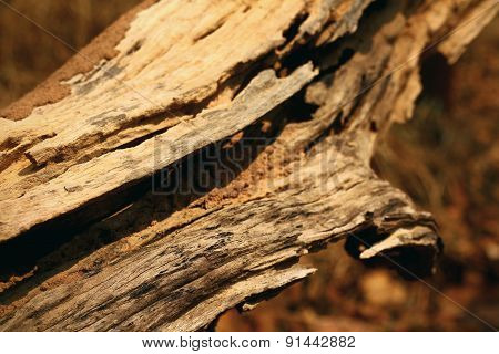 Bark Or Pile Of Pine Wood