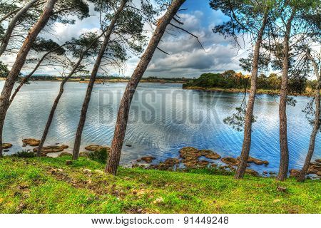 Pine Trees Over The Water In Pond Calik