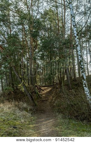 The Narrow Forest Path
