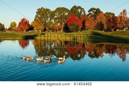 Henly Lake Autumn