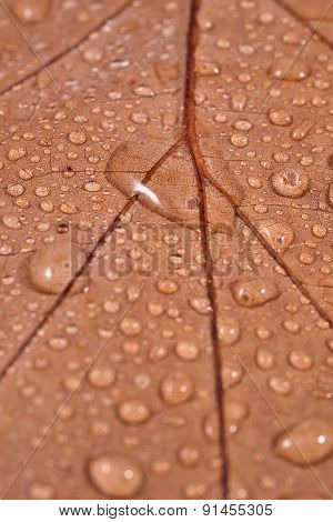 Dry Leaf With Water Drops