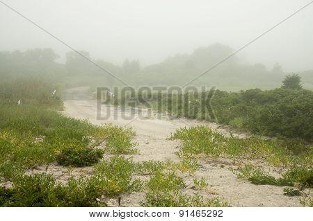 Beach Loop In Mist
