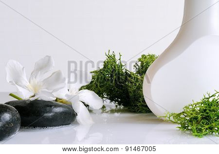 Beauty Product With Seaweed Isolated